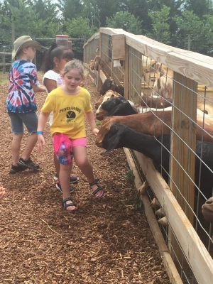 fun at the goat feeding station